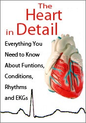 Image of The Heart in Detail: Everything You Need to Know About Functions, Cond